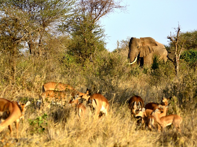 elephant-650627_1280