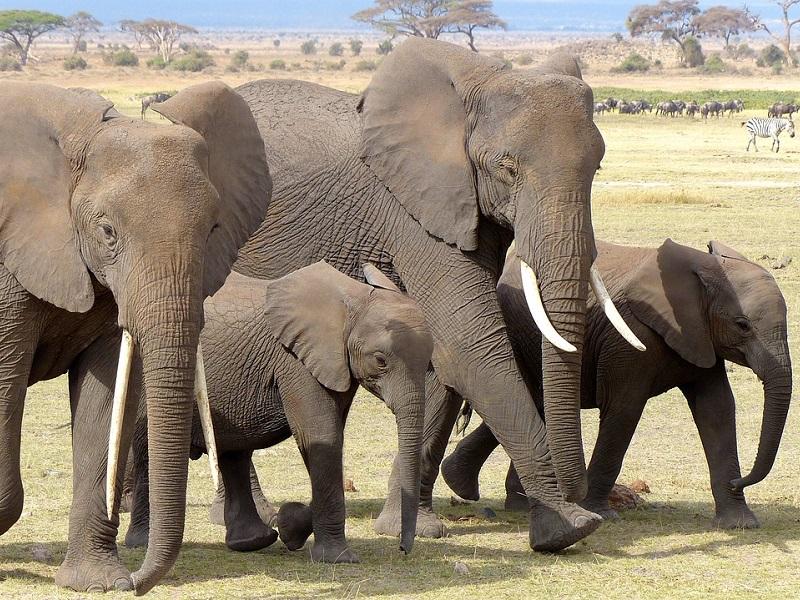 Kenia i jej przyroda: Park Narodowy Amboseli