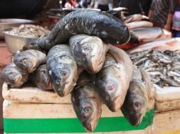 Jak przygotować świeżą rybę?