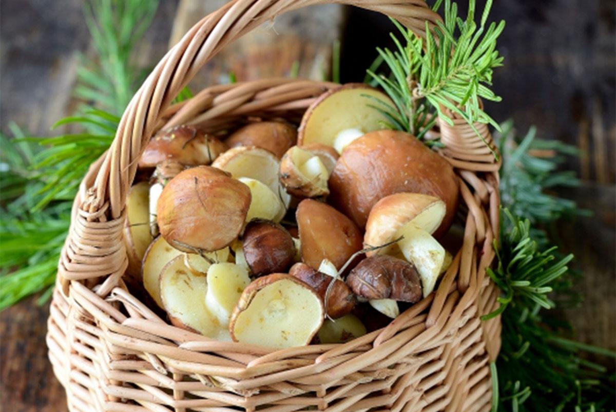 Z czym najlepiej łączyć grzyby?